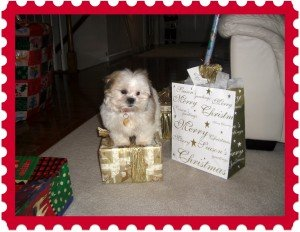 christmaspuppypresent