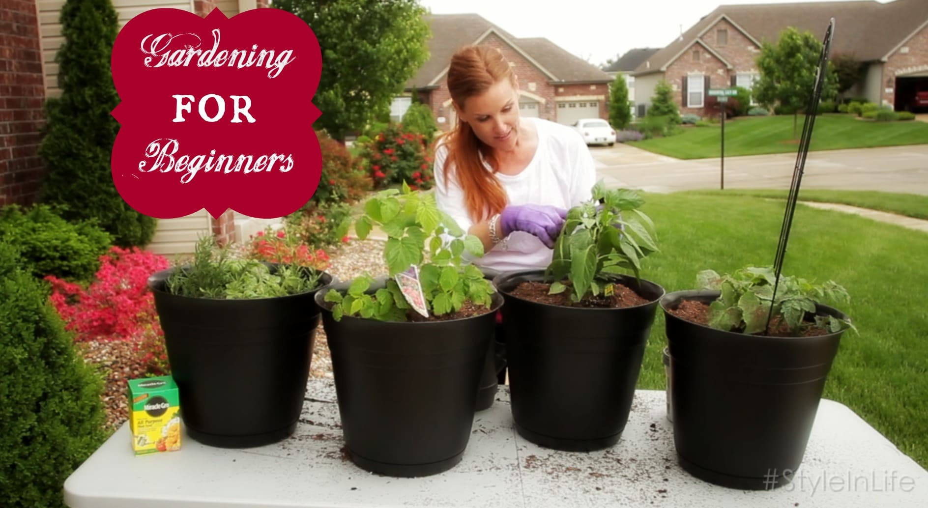 How To Plant A Vegetable Garden For Beginners Pretty