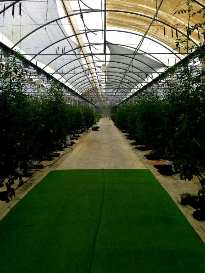 Generations Riviera Maya Greenhouse2