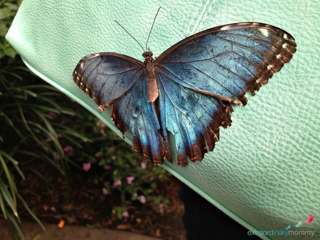 10 Must See Attractions in St. Louis: Butterfly House