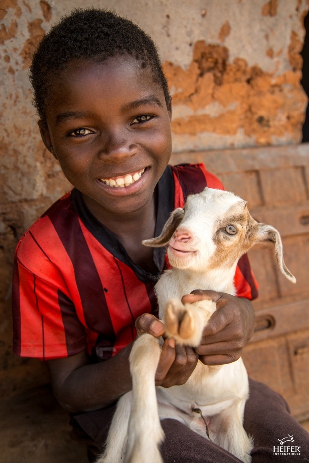 Teaching Children the Beauty of Giving: Gifts from Heifer International