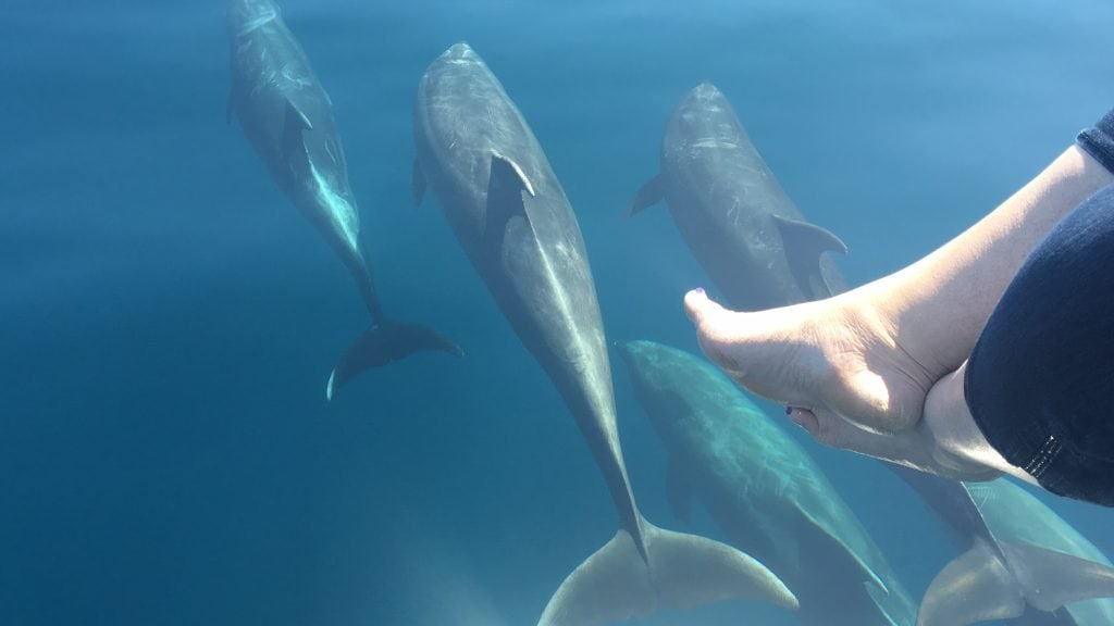 5 Reasons to Book a Carnival Cruise out of Los Angeles - Catalina Island Dolphin Tour