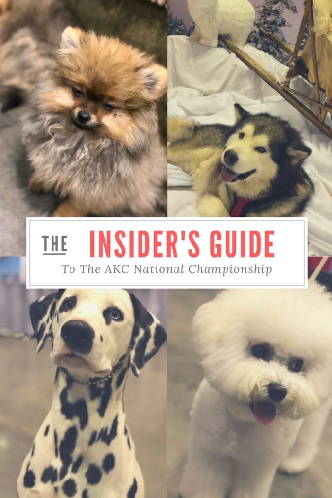 An Insider's Guide to the American Kennel Club Championship Dog Show