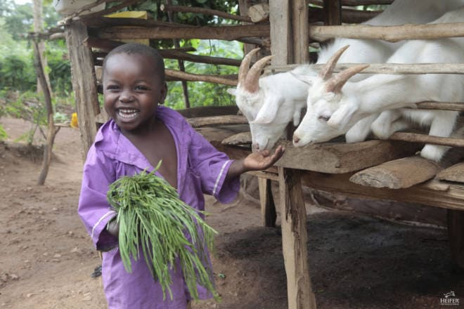 Give Good, Get Good: Gifts that Give - Heifer International