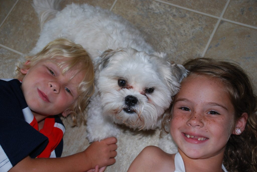 Tips for Taking Care of Your Dog During the Holidays - Shortstop + Kids