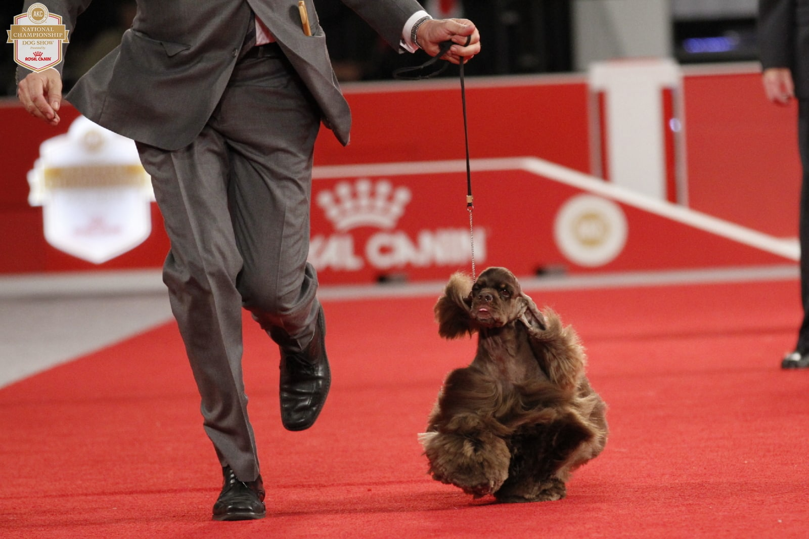 An Insider's Guide to the American Kennel Dog Show: Best in Show