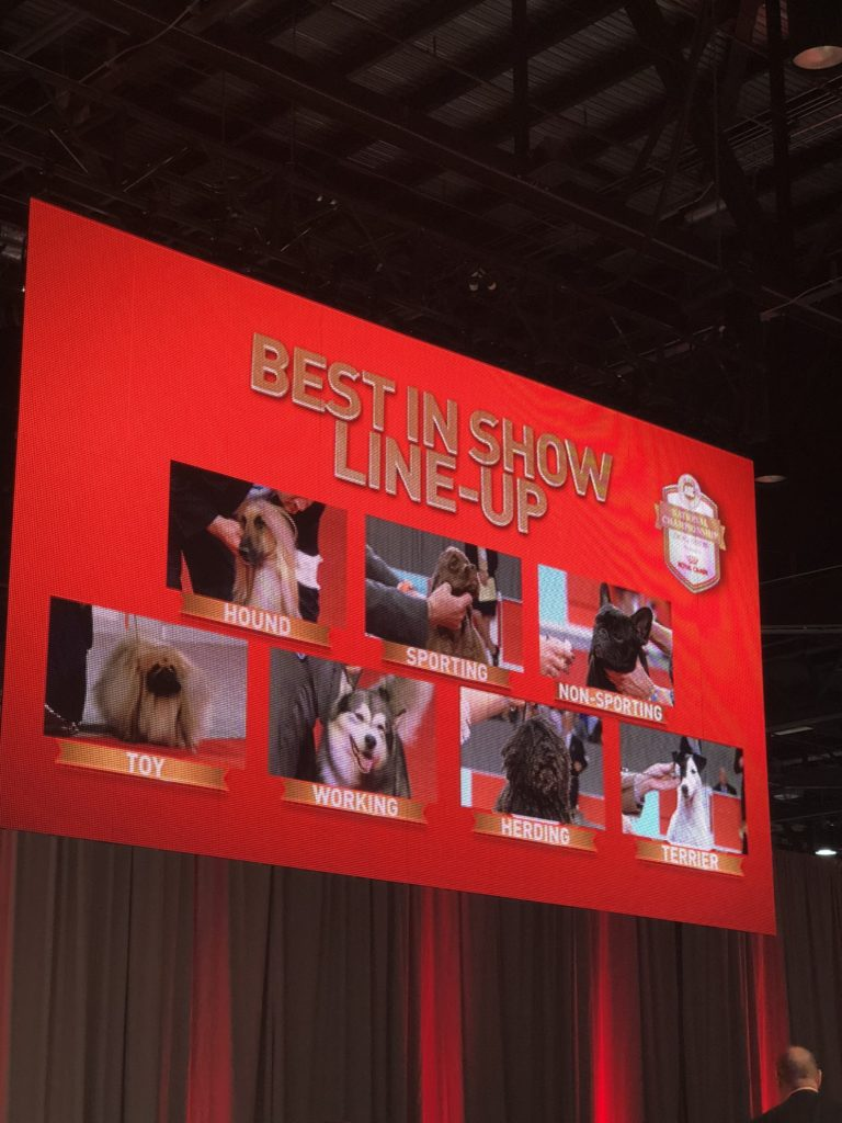 An Insider's Guide to the American Kennel Club Dog Show: Best in Show - Final Seven 2017