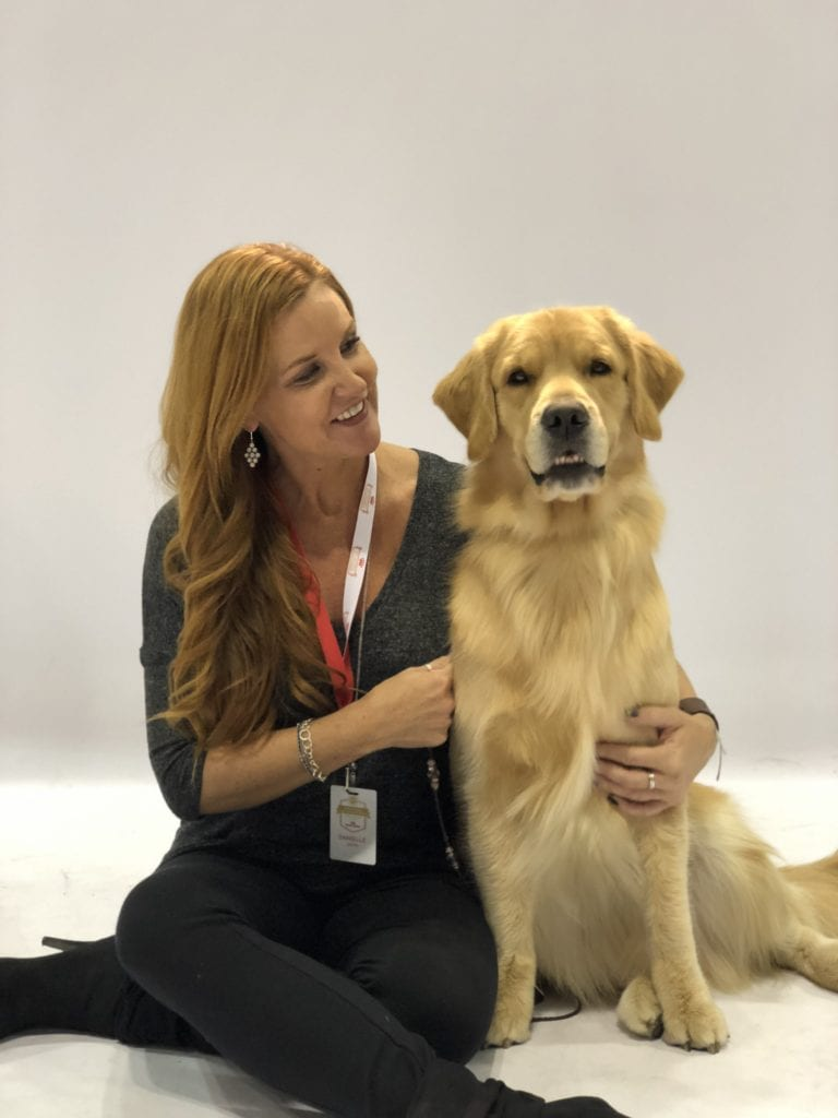 An Insider's Guide to the American Kennel Club Dog Show - Best in Show - Golden Retriever - Bree