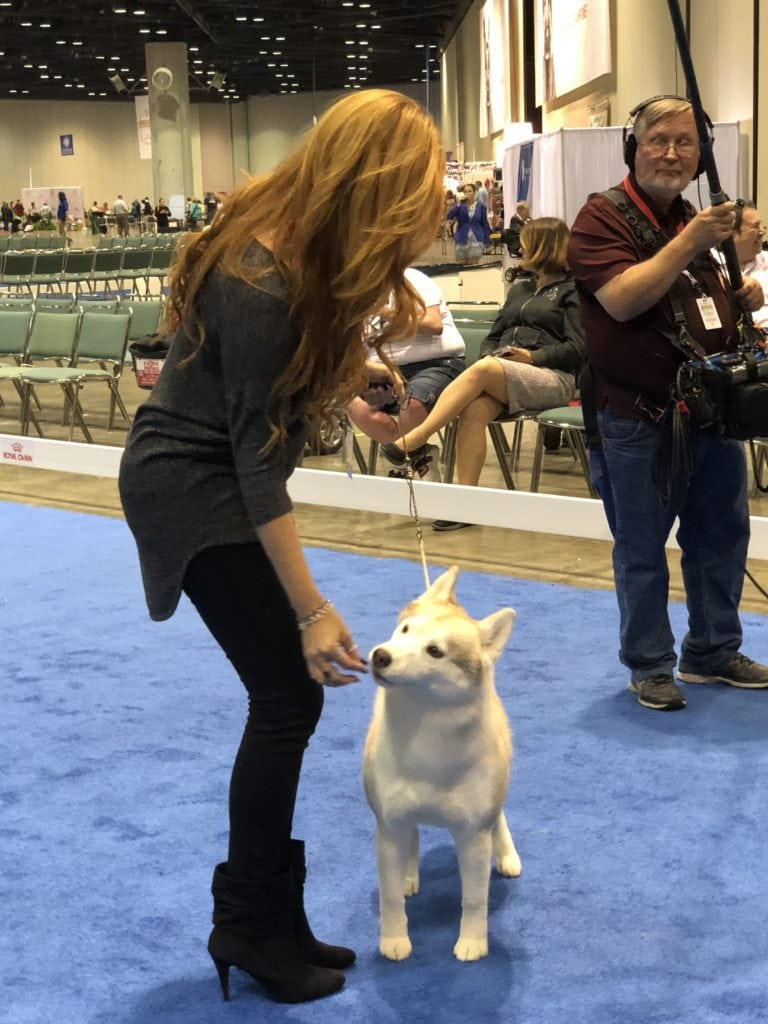 An Insider's Guide to the American Kennel Club Dog Show: Demonstrations