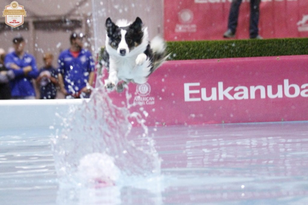 An Insider's Guide to the American Kennel Club Dog Show: Dock Diving