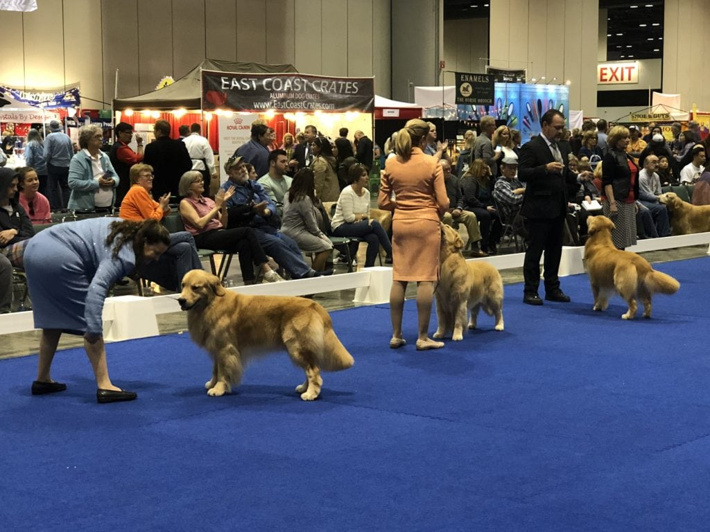 An Insider's Guide to the American Kennel Club Dog Show: Golden Best in Show