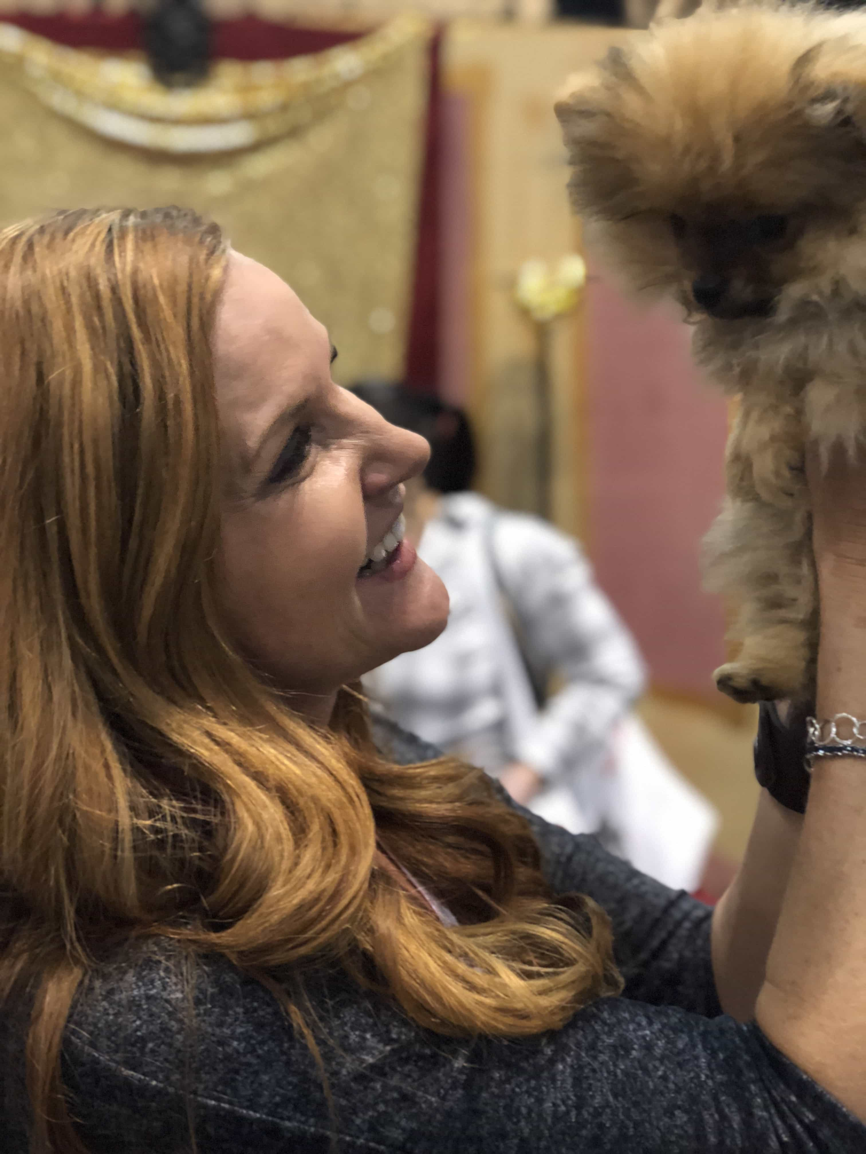 An Insider's Guide to the American Kennel Dog Show: Pomeranian -DInky