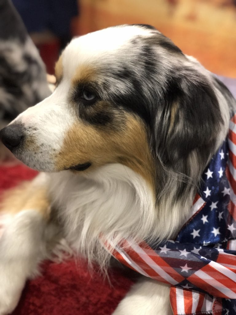 An Insider's Guide to the American Kennel Club Dog Show: