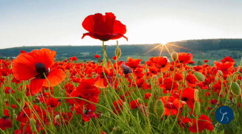 Be a Tall Poppy - Tall Poppy Syndrome