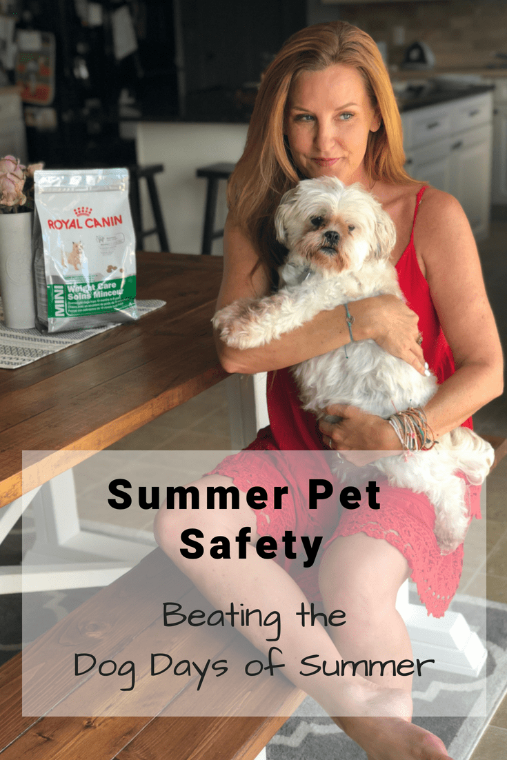 Summer Pet Safety: Beating the Dog Days of Summer